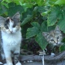 katze - gatto
